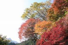 2009_11_07_009